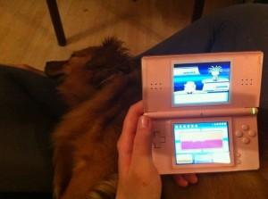 Nintendo DS, sleeping dog.